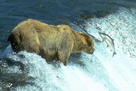 Brooks Falls - Katmai Nationalpark - Alaska